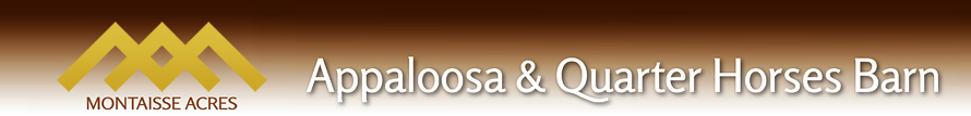 Appaloosa & Quarter Horses Barn